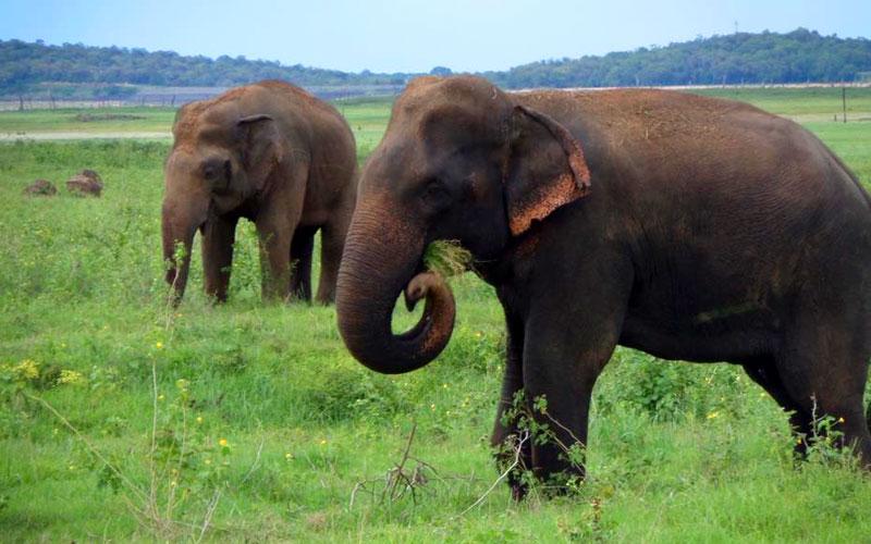 Kaudulla National Park | Kaudulla Safari | Safari jeep Kaudulla