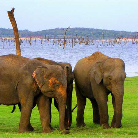 Kaudulla National Park Safari