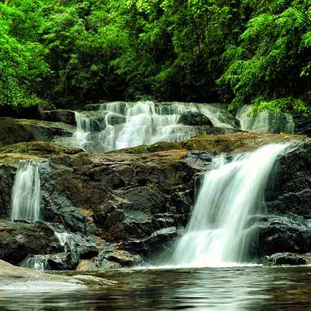 Sinharaja Rain Forest | Trekking & Bird Watching In Sinharaja Rain Forest