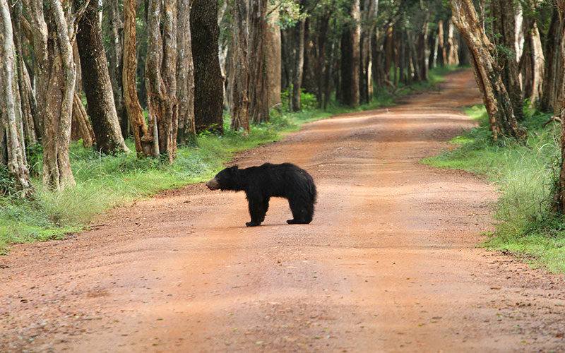 Wilpattu National park | Safari in Wilpattu National park