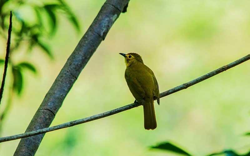 Bird watching and trekking in Kitulgala