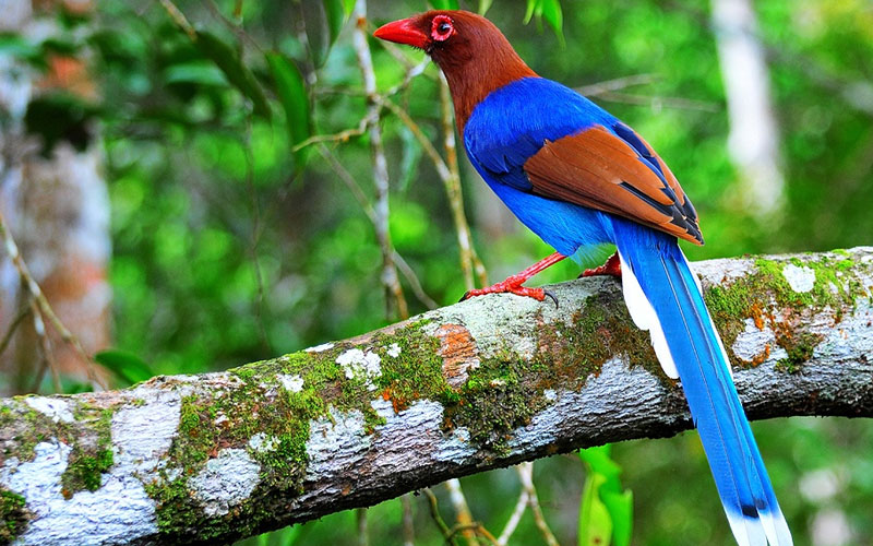 Sri Lanka Bird watching Tours | Bird watching Tours in Sri Lanka