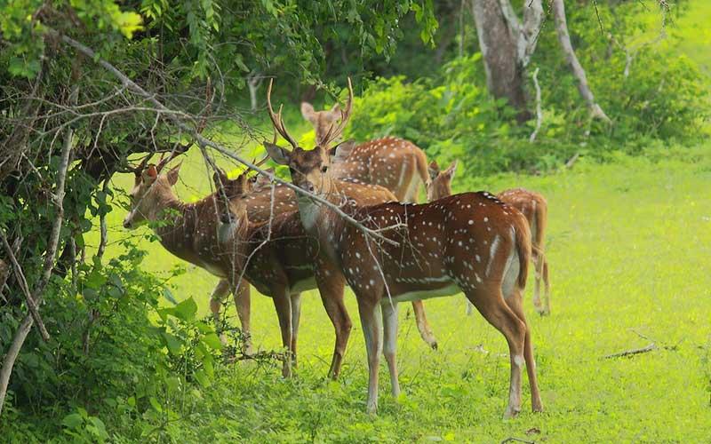 Bundala Safari Tours