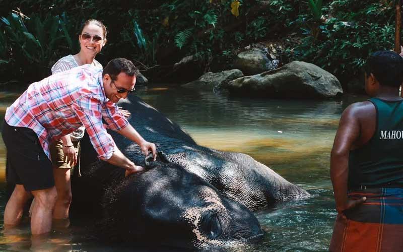 Elephant Foundation | pinnawala Elephants bath