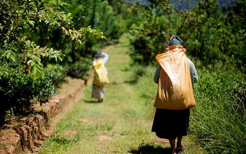 Explore an organic farm near Ella