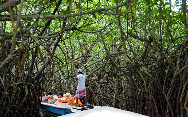 Madu Ganga Boat Ride | Things to do in Balapitiya