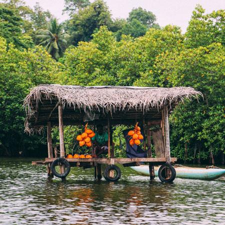 Madu Ganga Boat Ride | Madu River Balapitiya