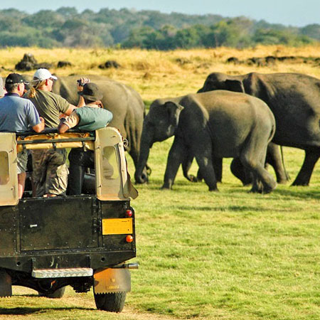 Minneriya National Park | Minneriya Safari | Minneriya Safari Tours Sri Lanka