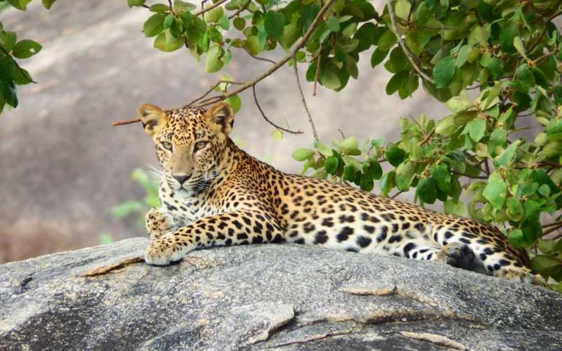 Yala Safari Tours