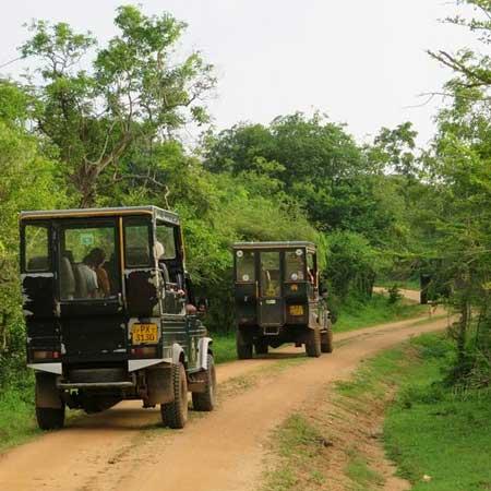 Yala Jeep Safaris   Yala Safari Game Drives   Jeep Tours in Yala Park