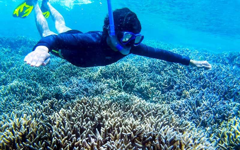 Snorkeling in Sri Lanka   Snorkeling places