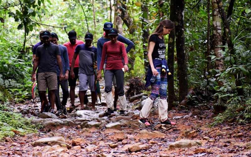Trekking & Bird watching in Sinharaja Rain Forest