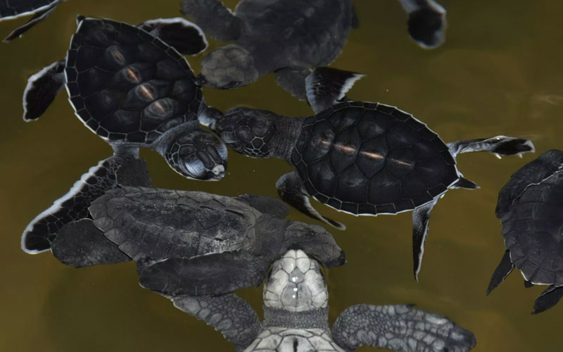 Visit Turtle Hatchery