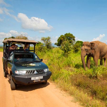 Udawalawe National Park Safari   Safari in udawalawe