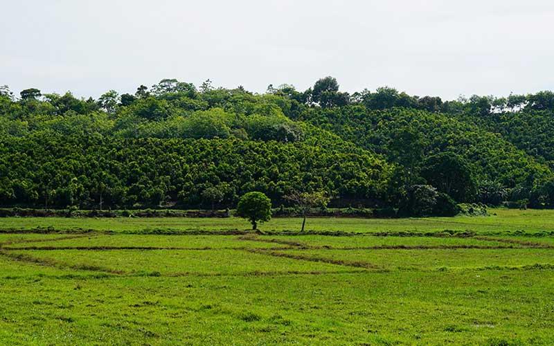 Visit a working cinnamon estate in Sri Lanka