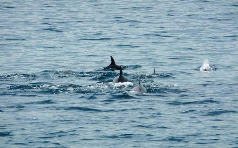 Weligama Whale Cruise | whale watching weligama - mirissa
