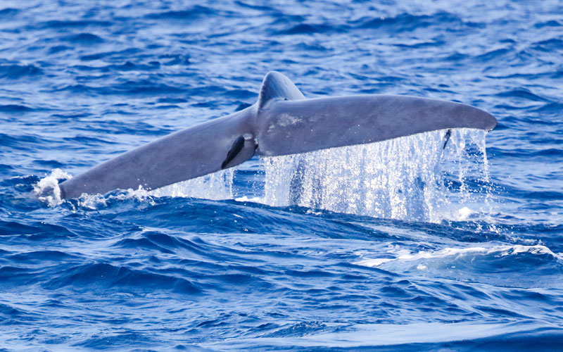 Whale & Dolphin Watching in Sri Lanka | Whale & Dolphin Watching Tours