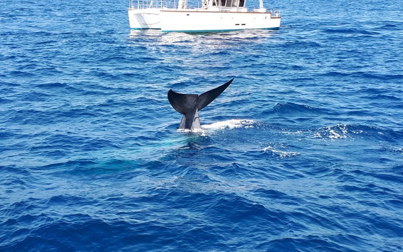 Mirissa Whale Watching | Mirissa Whale Watching Tours