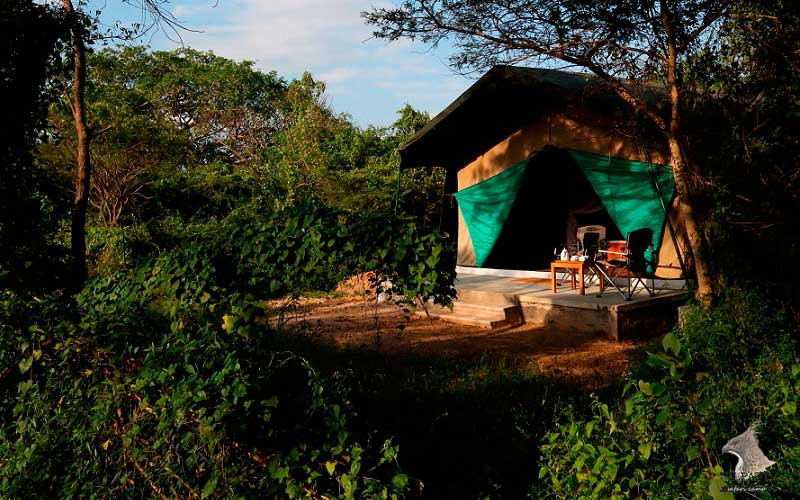 Wilpattu Safari Camp 1 Night