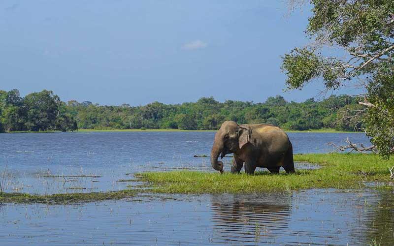 Wilpattu National Park Safari, safari in wilpattu