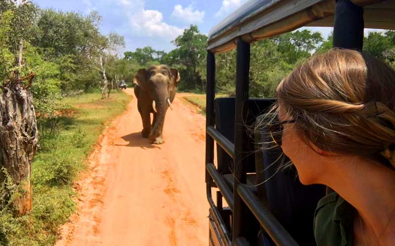 Full Day safari in Yala National Park