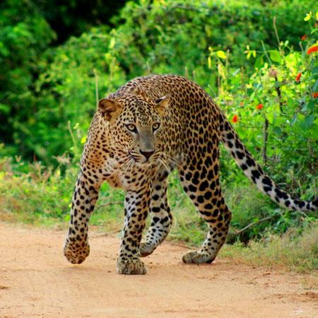Full Day safari in Yala National Park
