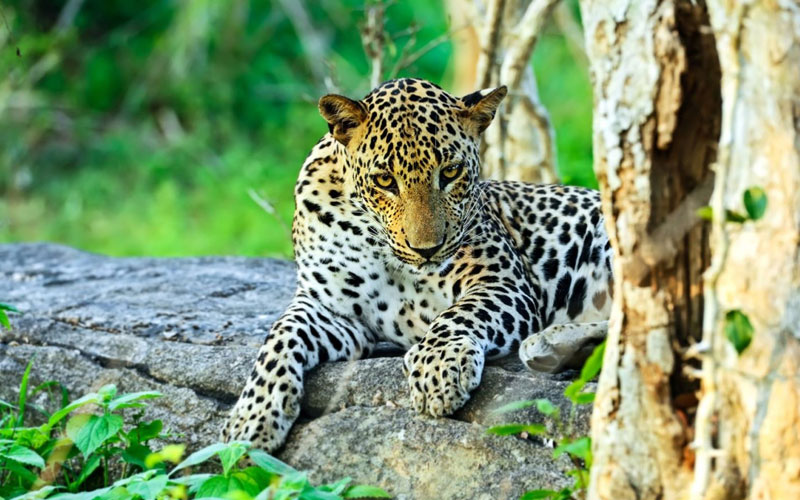 Wilpattu Safari Tours